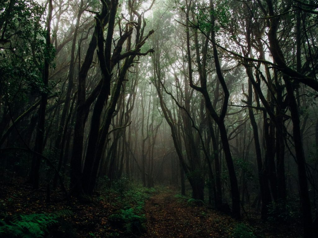 جنگل سر برج - رنت اتو